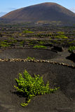 Lanzarote spain la geria s  cultivation viticulture winery, Royalty Free Stock Photography