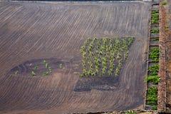 Lanzarote spain la geria vine screcultivation viticulture winery Stock Image