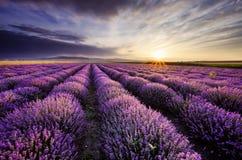 Lavender Sunrise Royalty Free Stock Photography
