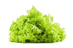 Leaf lettuce Stock Photography