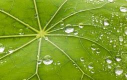 Leaf Water Droplets Background Stock Images
