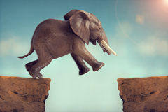Leap of faith concept elephant jumping across a crevasse Stock Image