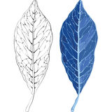 Leaves in the frost  illustration Stock Photography
