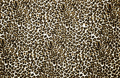 Leopard Print Stock Photos