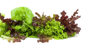 Lettuce of different types on a white background Stock Photography