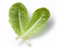 Lettuce Leaf Stock Photography