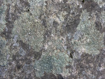 Lichen and Rock Abstract Royalty Free Stock Photo