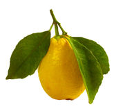 Limone Immagine Stock