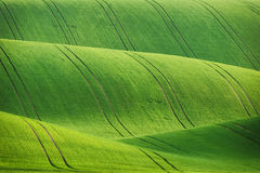 Lines and waves fields Royalty Free Stock Photos