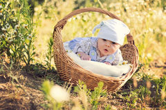 Little boy with a basket Stock Photos