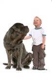Little Boy With Big Dog Stock Photo
