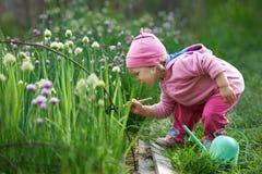 Little farmer raking onions in the garden Royalty Free Stock Images