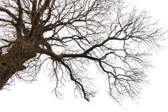 Lokalisierter toter Baum Lizenzfreie Stockbilder