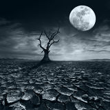 Lonely dead tree at full moon night under dramatic cloudy sky Royalty Free Stock Photo