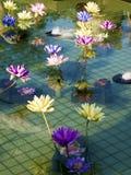 Loto variopinto di plastica della decorazione in stagno, Taipei Fotografia Stock Libera da Diritti