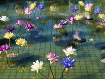 Loto variopinto di plastica della decorazione in stagno, Taipei Fotografie Stock