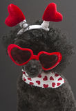 Lots of Hearts On A Funny Looking Dog Royalty Free Stock Photography