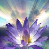 Lotus and Light Royalty Free Stock Photo