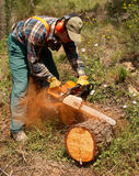 Lumberjack in action Royalty Free Stock Photos
