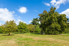 Lush Green Tranquil Woodland Garden Stock Photography