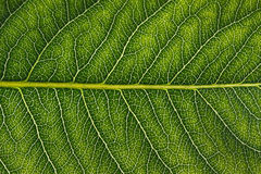 Macro of Leaf Royalty Free Stock Images
