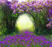 Magic spring forest Stock Photo