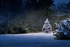 Magical snow covered Christmas Tree stands out bri Stock Images