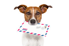Mail dog Royalty Free Stock Photography