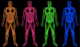 Male coloured bodies Stock Photography