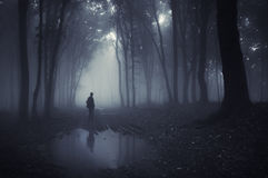 Man in a forest with pond and fog after rain Stock Photos