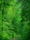 Man in a green forest Royalty Free Stock Photo