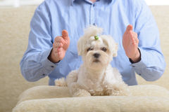 Man practicing reiki therapy Royalty Free Stock Photo