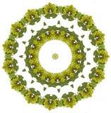 Mandala van druiven Stock Afbeeldingen