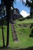 Mayaruinen mit Weg Stockbild