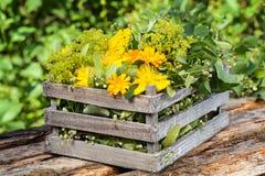 Medicinal herbs, medicinal plants in wooden box Royalty Free Stock Photo