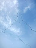 Migratory Birds Flying in Formation Royalty Free Stock Photo
