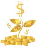 Money plant Royalty Free Stock Photos