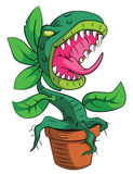 Monster Plant Royalty Free Stock Image