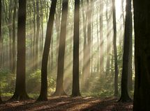 morning in the misty forest  Royalty Free Stock Image