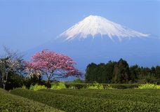 Mount Fuji I Royalty Free Stock Photos