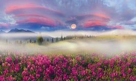 Mountain ranges of Ukraine Royalty Free Stock Images