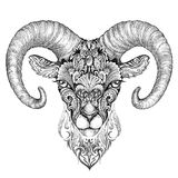 Mountain sheep, argali, black and white ink drawing Royalty Free Stock Photos
