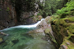 Mountain Stream in the Pacific Northwest Royalty Free Stock Photo