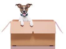 Moving box dog Stock Images