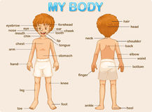 My body Stock Photo