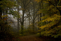 Mystic Forrest Stock Images