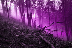 Myth forest Royalty Free Stock Images