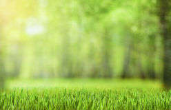 Natural green forest background Stock Photos