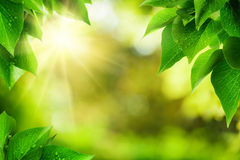 Nature background framed by green leaves Stock Photography