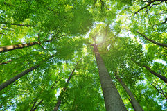 Nature forest trees Royalty Free Stock Image